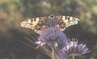 Foto di un fiore con farfalla