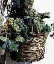 Foto di un cesto pieno d'uva