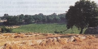 Foto tipico paesaggio agrario in Contrada Marziolla: vigneto, seminativo e bosco
